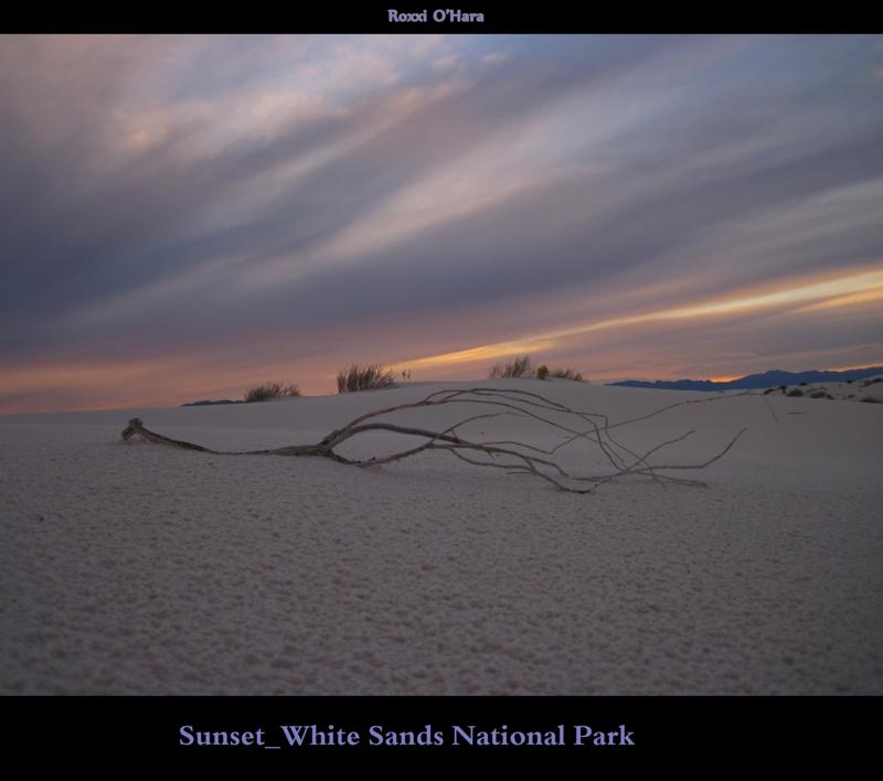 Sunset and Branch, White Sands National Park - Photographer: Roxanna O'Hara