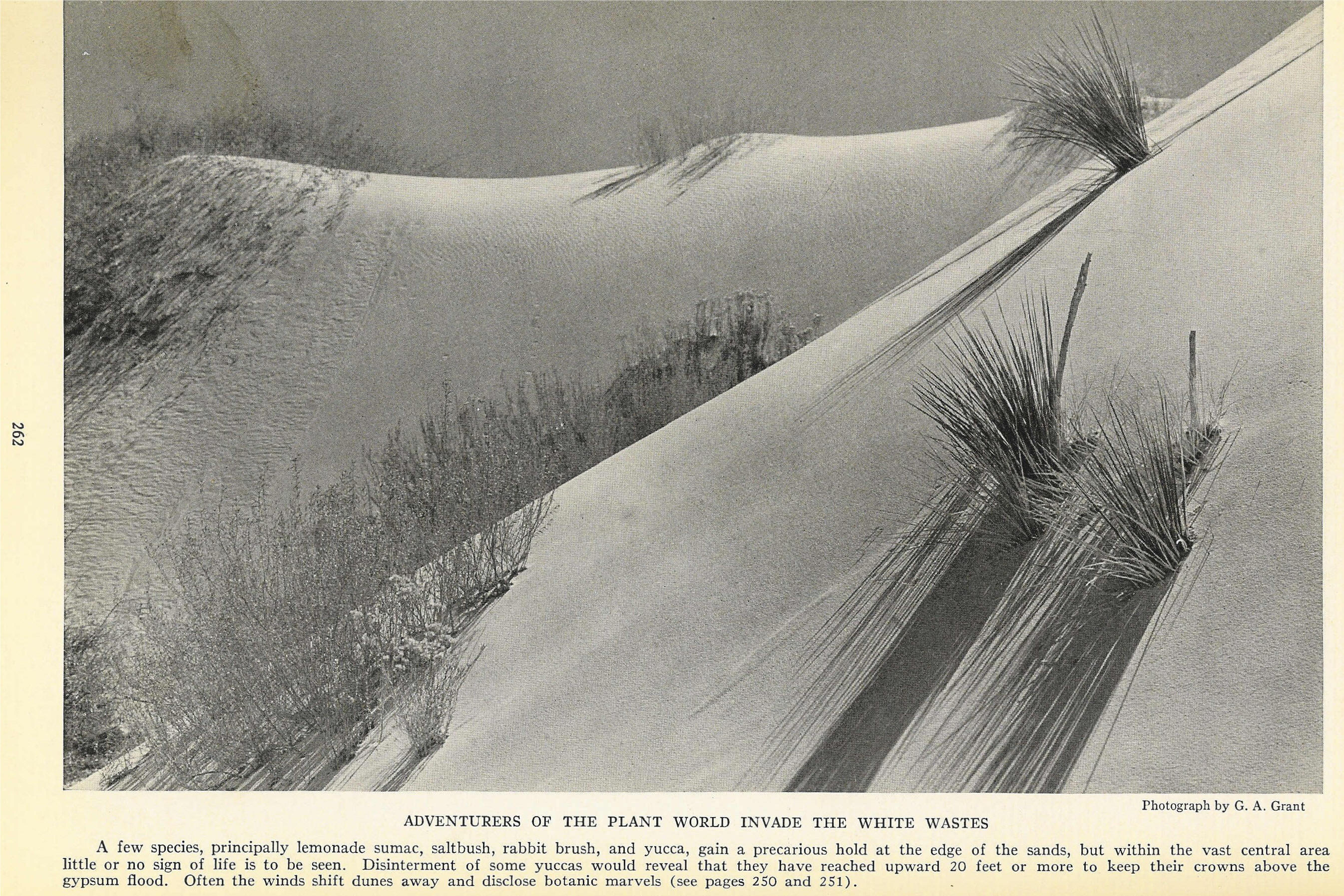 The White Sands of Alamogordo - National Geographic, August 1935